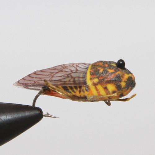 True Cicada