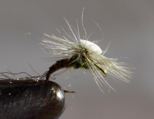 Sprout Midge Black