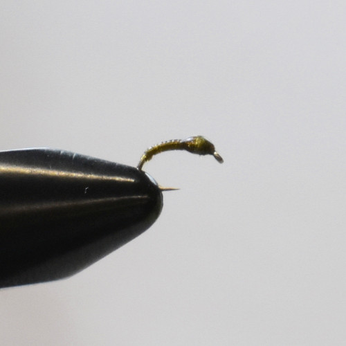 Midge Larvae Olive