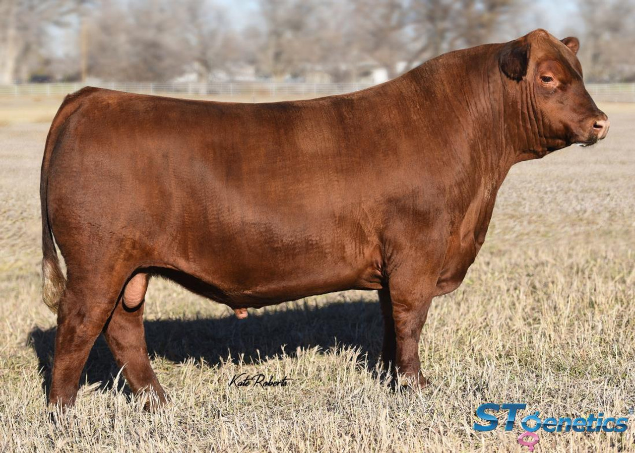 LSF SRR Exceptional 5464C