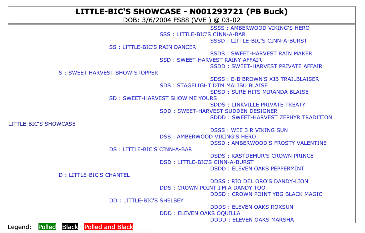 Little-Bic's Showcase