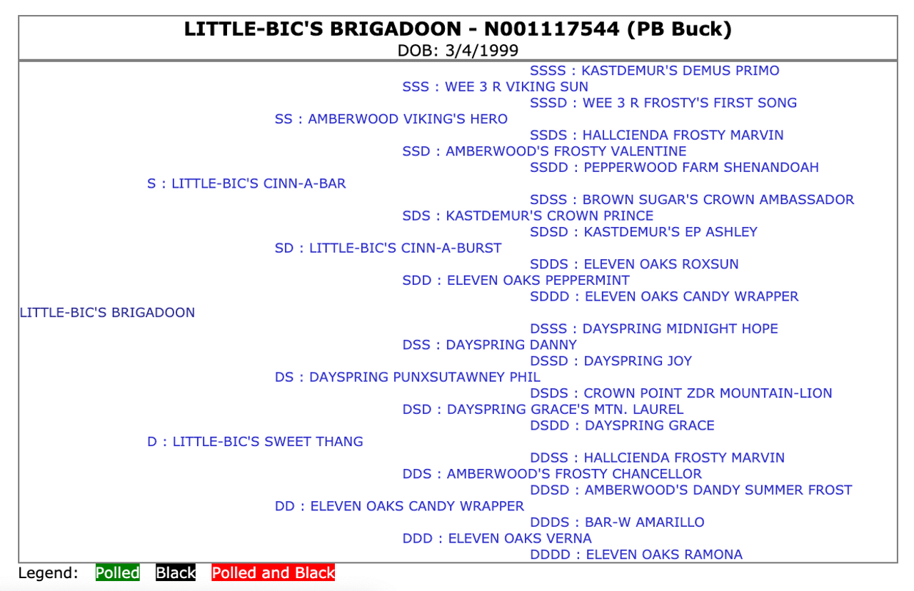 Little-Bic's Brigadoon