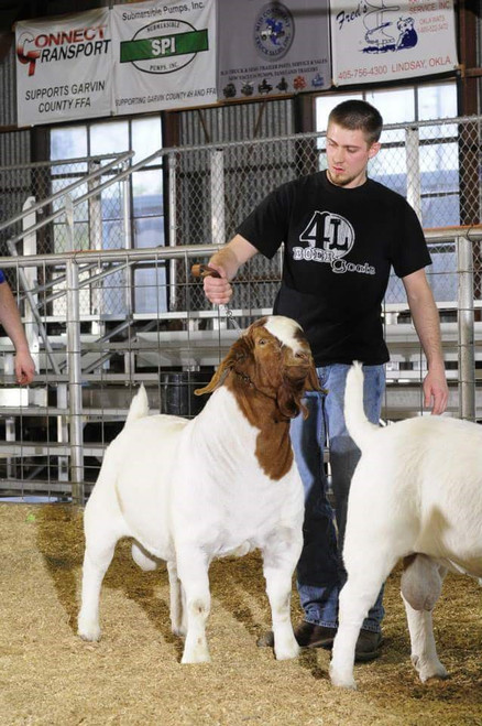 4-L Boer Goats 4-L Reyzer Sharp Enobled