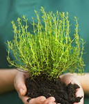 Fast Grow Planting Soil is a must for every gardener in any zone for lush, healthy plants, trees and shrubs.