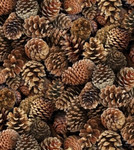 Pine cones close their scales to protect the seeds from cold temperatures, wind and even animals that might try to eat them.