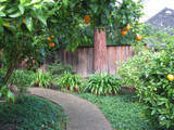 Favorite Fruit Tree Varieties That You Can Plant Today