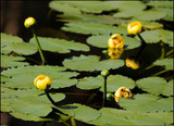 Wetland Plants Are A Cornerstone For Gardens And Landscapes