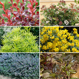 Easy Perennials To Grow In Your Garden For The Best Look