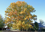 ​Best Trees For Shade: Many Varieties To Choose From!