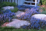 Ajuga: A Low Maintenance Plant That Stands Out In A Garden