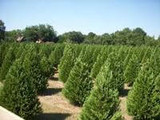 Top Hedges For Privacy