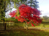 The Crepe Myrtle Tree Is Great For Any Garden To Stand Out