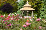 Tips On Planting A Rose Garden:  What You Can To Do Now