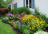 ​Tips For A Successful Perennial Garden: Plant A Color Field