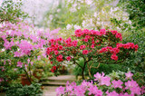​Flowering Trees Are Fragrant and Beautiful Around A Home