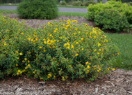​St. John's Wort: Truly Medicinal, Great Blooming Plants!