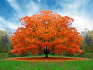 Fall Foliage Color And Style For The Gardener To Enjoy