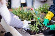 ​Mean Green Sustainable Garden:  Help The Planet