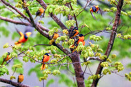 How To Attract Birds To Your Garden And Landscaping Areas