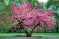 Flowering Trees: Add Beauty To Your Landscape Today