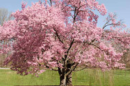 Flowering Tree Benefits: What They Will Really Do For You