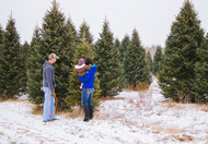 White Pine Trees Make Excellent Christmas Trees