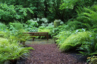 Native Fern Plants are Hardy and Make Excellent Border Plants