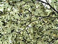 Three Flowering Dogwood Trees To liven Up Your Garden