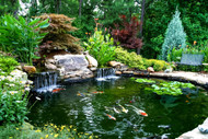 ​Aquatic Plants For A Water Garden Make The Perfect Addition