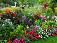 Protecting Your Gardens From Summer Heat