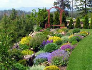 Enhancing Your Lawn  And Landscape With Trees and Plants