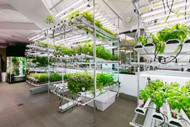 ​The Basics of Hydroponics: Safer? The Information You Need