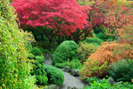 ​Choosing the Easiest Trees to Grow For Your Garden Online