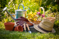 Using Tree Nurseries For Affordable Gardening