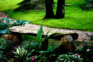 ​Why Using Moss Is The Best For Landscaping And Gardening