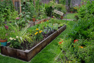 ​Grow Your Garden & Eat It Too With Herbs And Vegetables