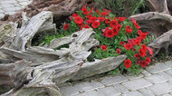 Driftwood Works Well In Landscaping For A Southwestern Theme