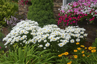 ​Another Sunshine Day: Sunny Perennials For Your Garden