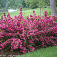 Buying Shrubs Online Today: Your Easy How-To Guide