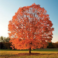 Tips On How To Make Trees Fast Growing In The Garden