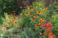 How Perennial Gardens Make A Beautiful Landscape For You