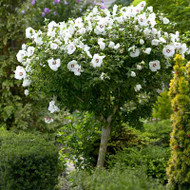 When And How to Prune Flowering Shrubs And Why It Is Vital