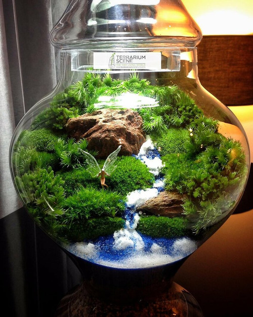 Mossarium Moss have giant roots balls below the surface and can be grown both in and out of the water.