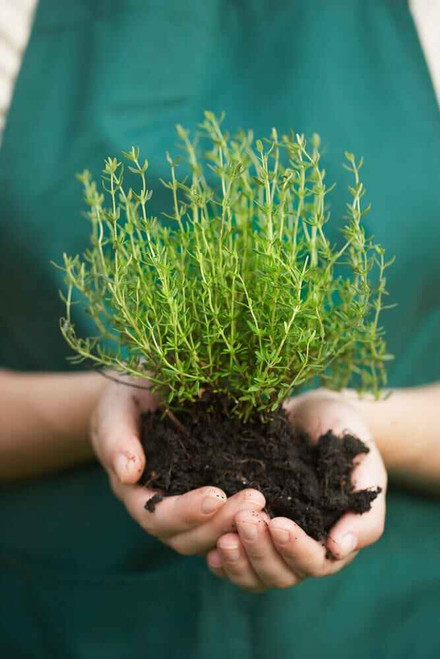 """""""Compost"""" is the rich black soil-like substance created when organic materials like shredded leaves and yard waste are fully decomposed."""