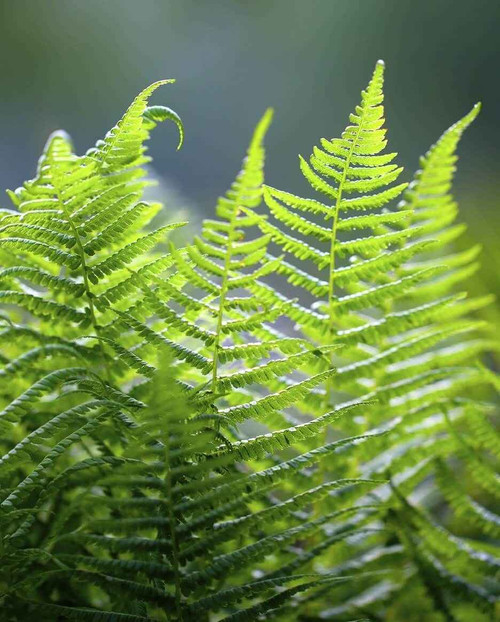 Ferns consist of stems, leaves and roots.