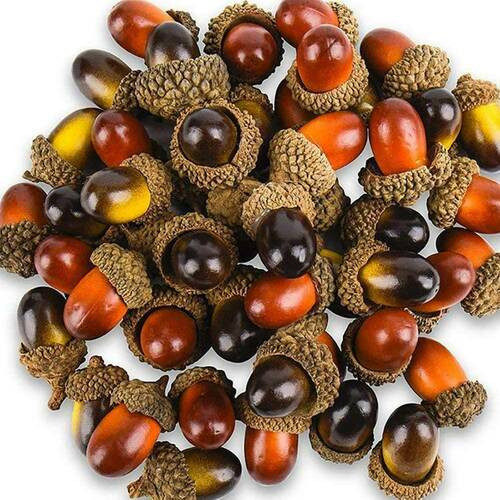 Fresh harvest Acorns can grow oak trees that can live hundreds of years.