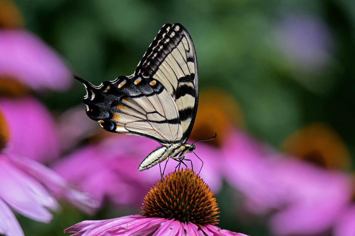the-best-plants-to-add-to-your-landscape-to-attract-butterflies.jpg