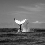 Whale tail image credited to sarzastore