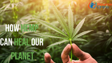 How Hemp Can Heal Our Planet
