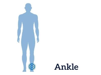 ankleillustration.jpg